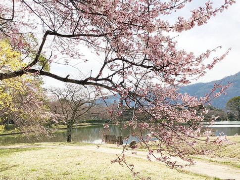 Osawa-no Ike Pond in Spring Colors
