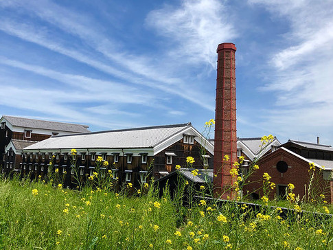 Cellar of Matsumoto Brewery and Mustard Plant Flowers