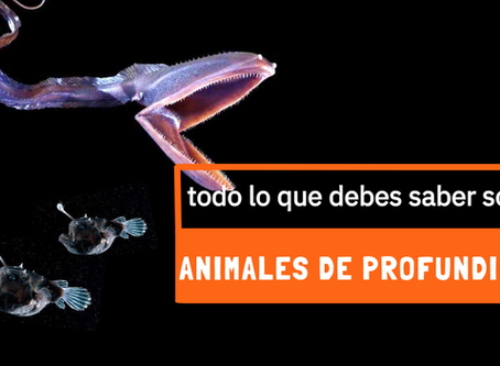 Animales de Profundidad