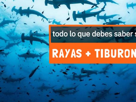 Rayas y Tiburones