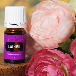 huile essentielle young living lavender