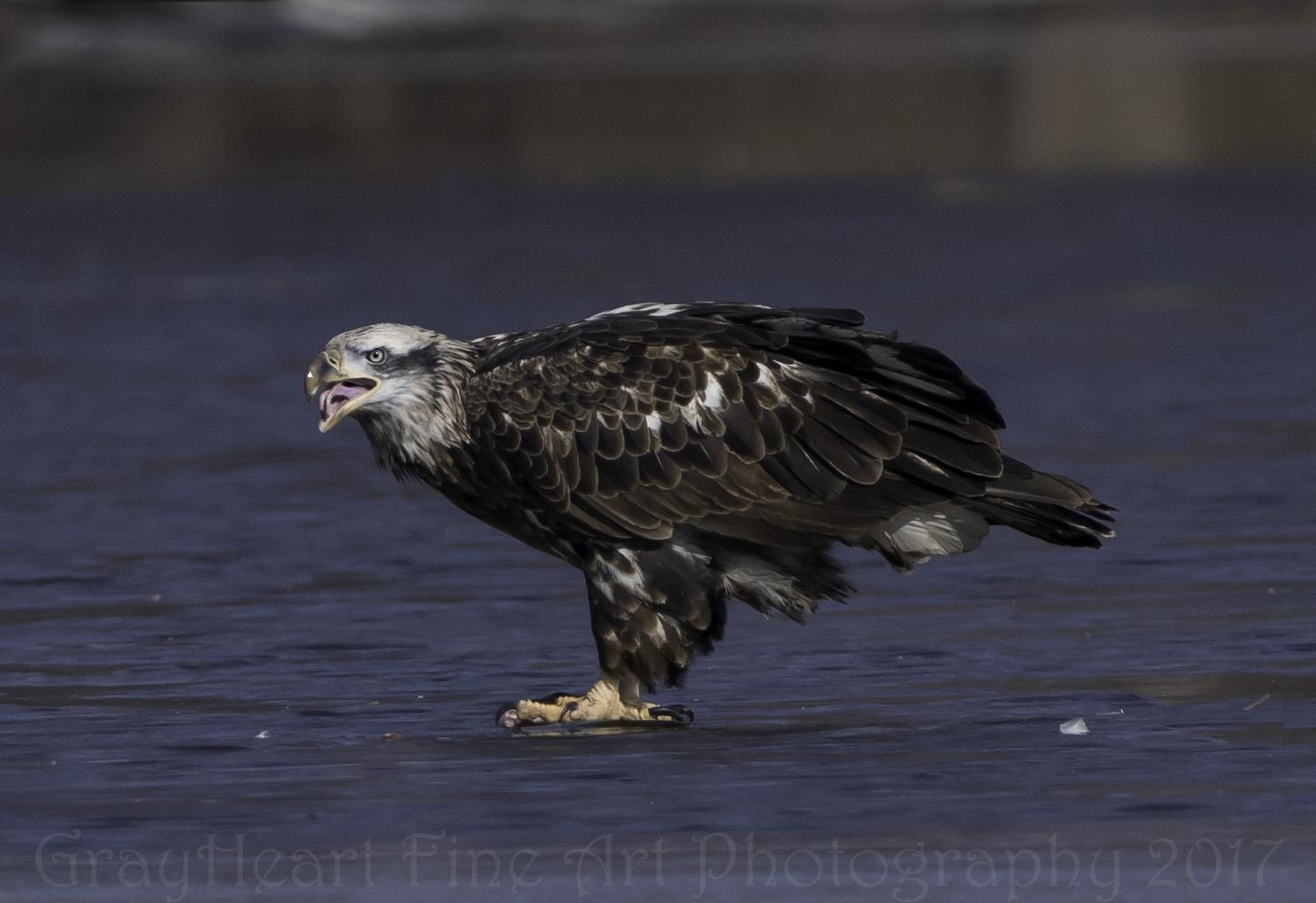 eaglehuntingriver
