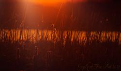 sunrise willows2