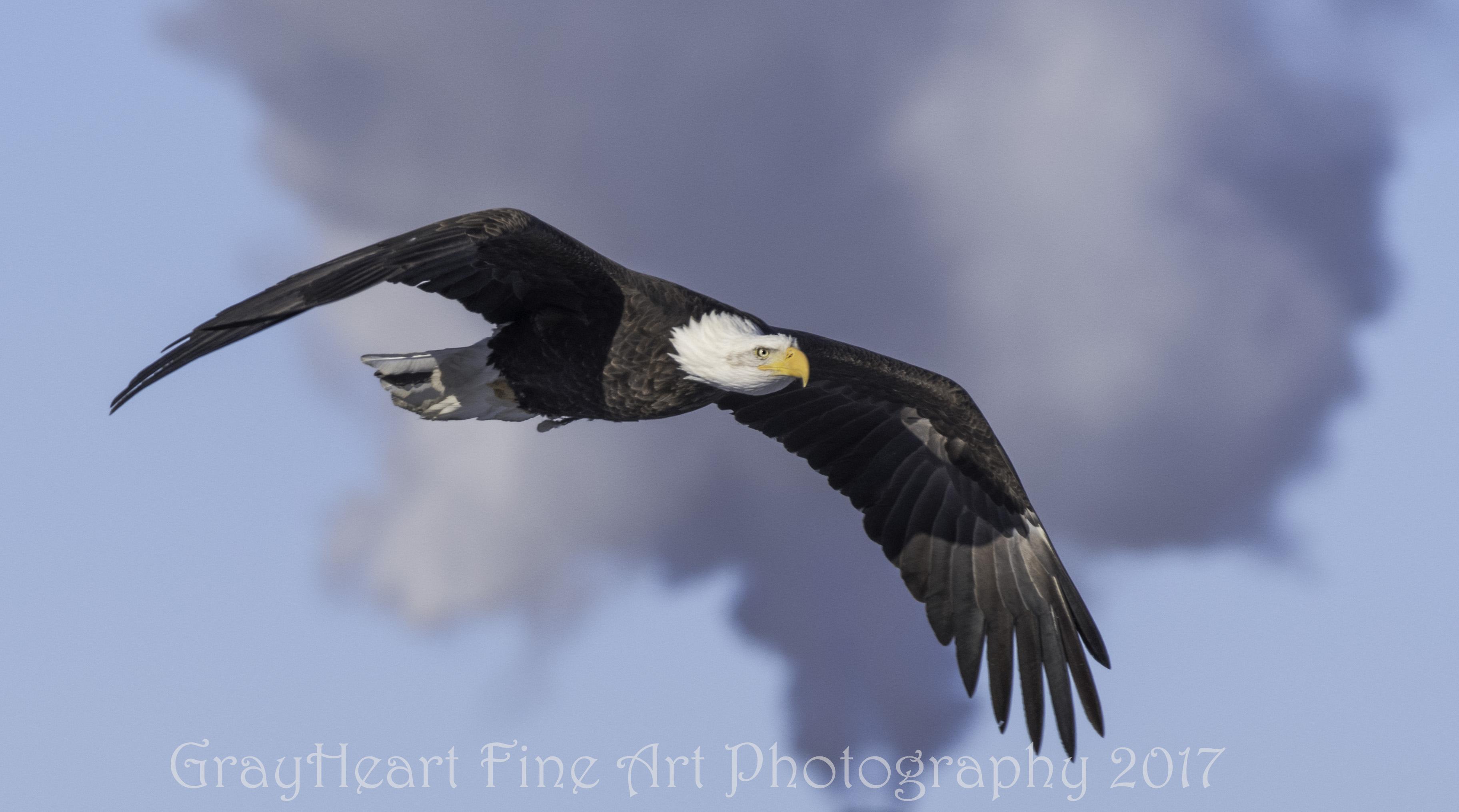 EagleCOLD7