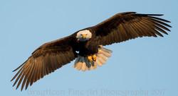 Eagle 1410
