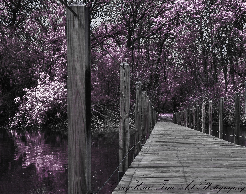 Bridge infrared