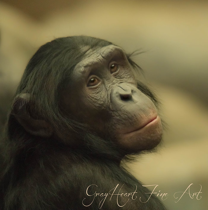 Bonobo Submission.jpg