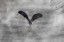 Eagle COLD3
