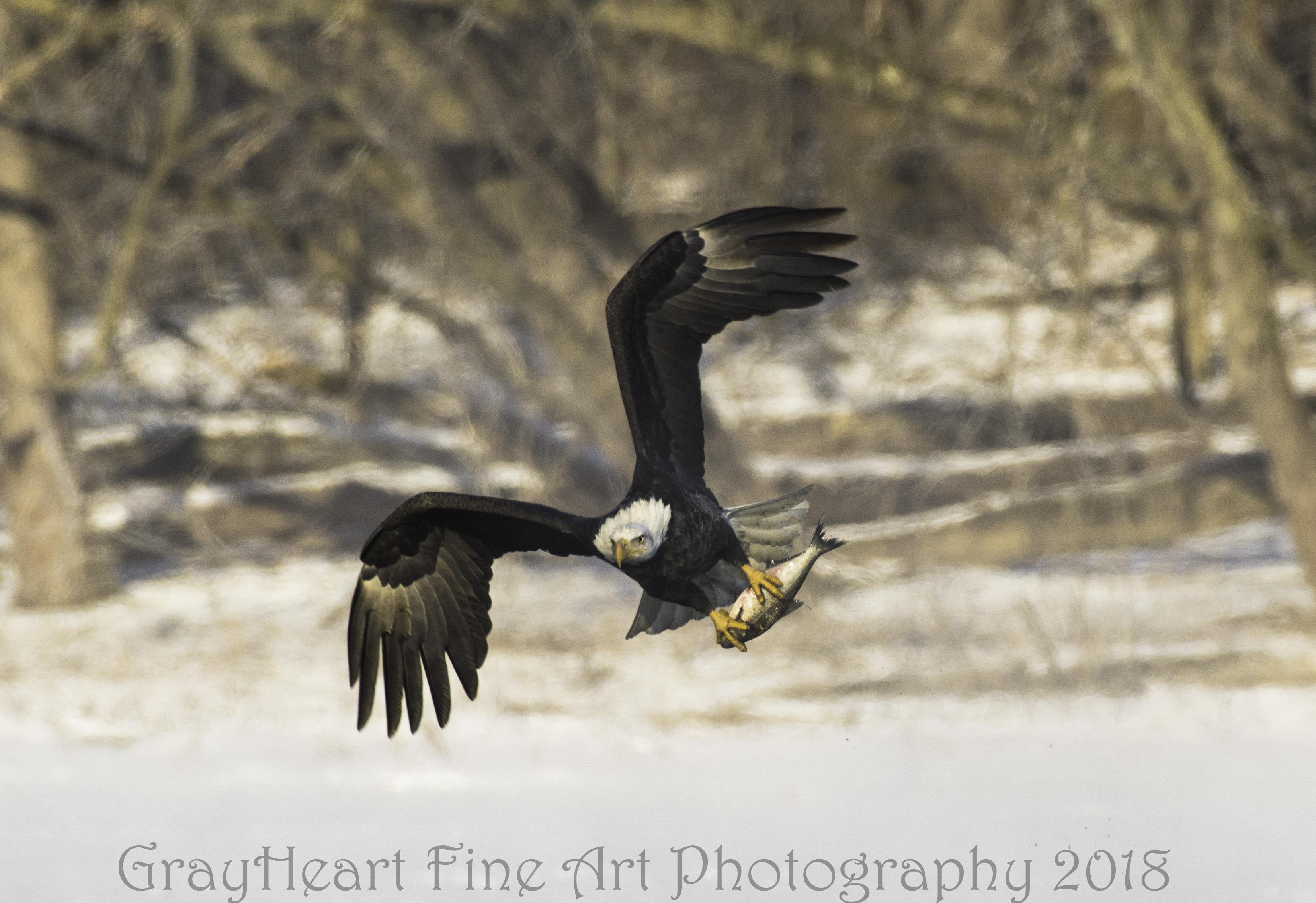 Saturday eagle 1