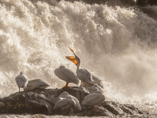 Beauty on the Rapids