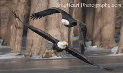 double eagle money GRAYHEART PROTECTED COPYRIGHT 2017-2