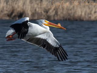 Why I Love Birds in Flight