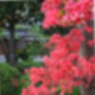 R0061446_e合気道竹の氣クラブ.JPG