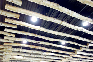図書館2階天井の白樺