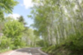 日本一の白樺美林