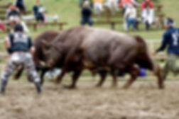 平庭闘牛大会