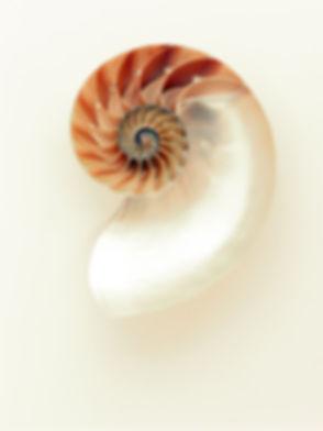 mollusc-mother-of-pearl-nautilus-33234.jpg