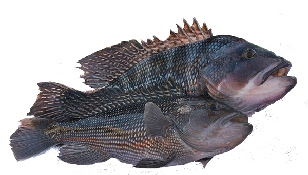 Local Black Seabass whole (price per lb)