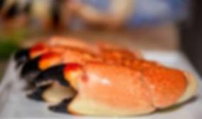 florida stone crab clae.jpeg