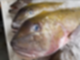 Tile fish1.png