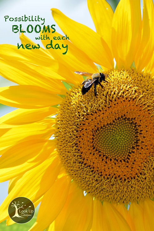 Inspirational Cards Pack - Possibility Sunflower