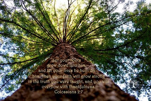 Grow in Him 8 x 10 Print