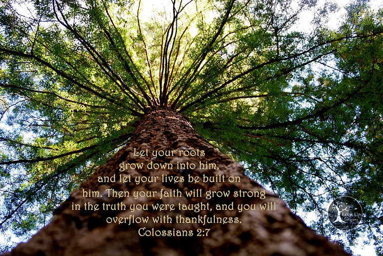 Image result for Colossians 2:7