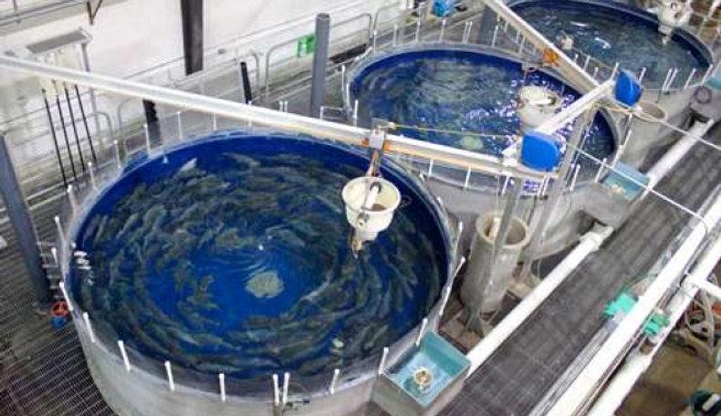 Мярк 2.2. Продуктивни инвестиции в аквакултура