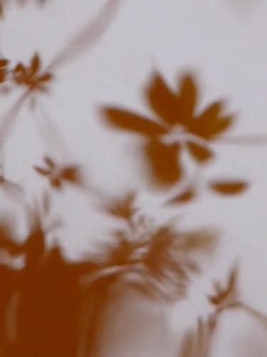 brownberg suriname.jpg