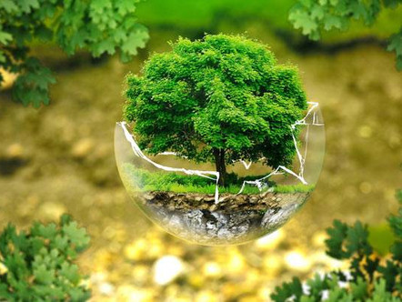 6 Clever Ways to Reduce Your Environmental Impact and Stay Healthy at the Same Time!