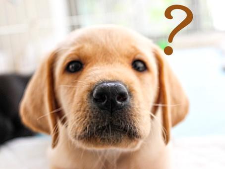 =ボディシグナルから読み解く「犬の気持ちを知ろう」=セミナー開催のお知らせ