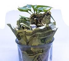 money-growth.jpg