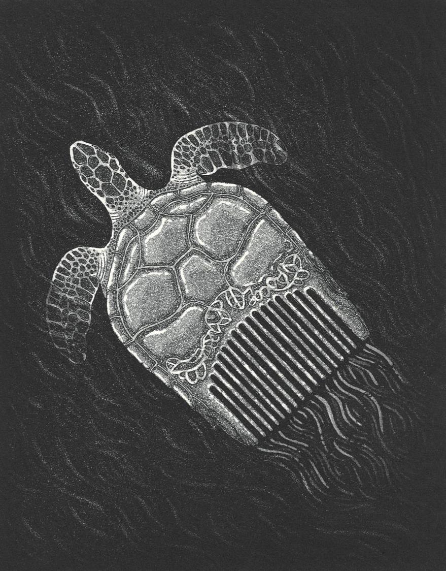 Hawksbill Turtlecomb