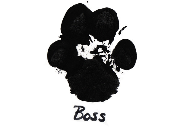 Boss Paw Print