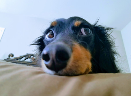 Advice from Dogs: 4 Tidbits on How to Treat Yo'self