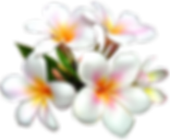Tropic flowers