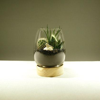 Succulent & Cacti Terrarium - Small