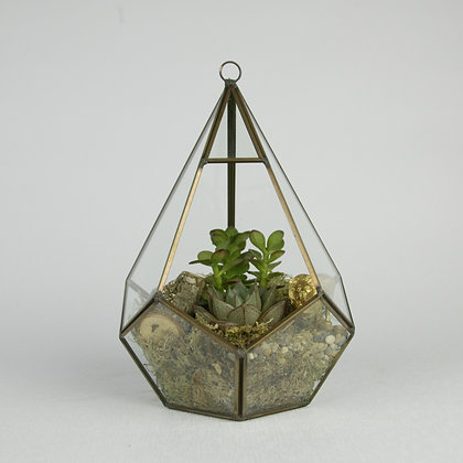 Metal Frame Succulent Terrarium