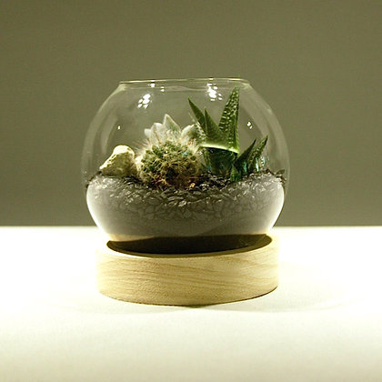 Succulent & Cacti Fishbowl Terrarium - Medium