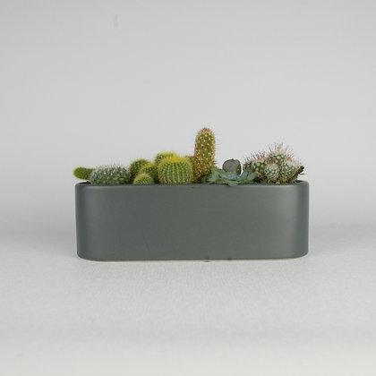 Trough of Cacti