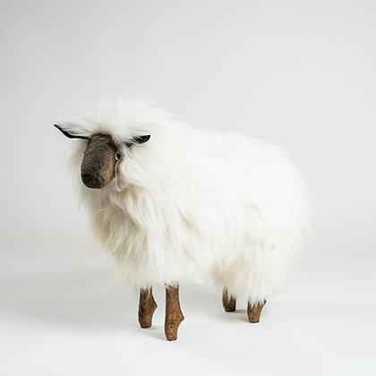 The Sheep - Atlantic Collection - Medium