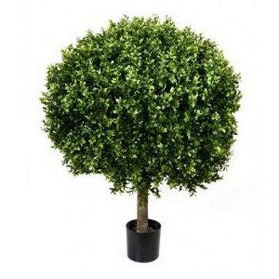 Boxwood Bush 30cm