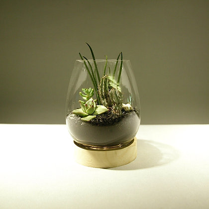 Succulent & Cacti Terrarium - Medium