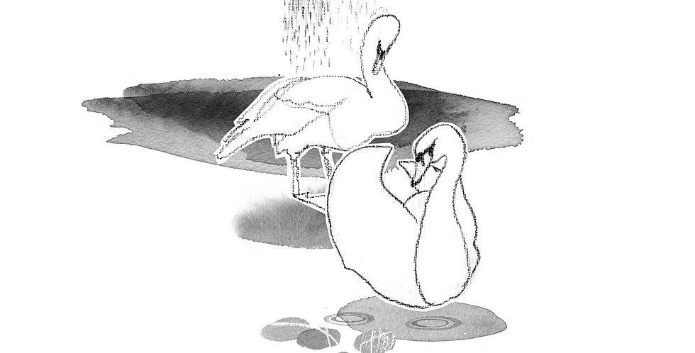 Claddagh Swans by © Siobhan McNutt