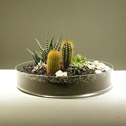 Succulent & Cacti Landscape
