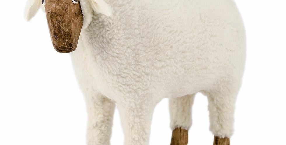 The Sheep - Medium -Looking