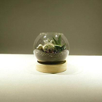 Succulent & Cacti Fishbowl Terrarium - Small