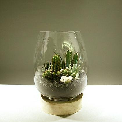 Succulent & Cacti Terrarium - Large
