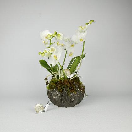 Phalaenopsis Orchid Pod Pot