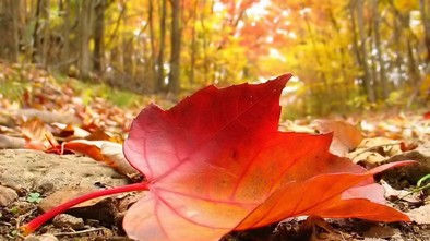 fall-autmumn-tree-leaves-autumn-falling-